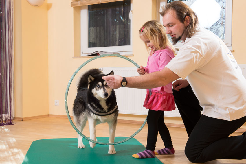 Therapie mit Hund
